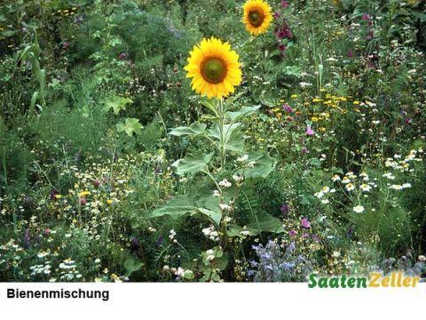 Wildblumenwiese-Bieneweide-Dez-2010_2