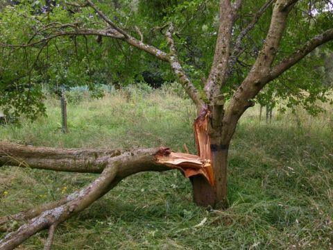 Baum-Windbruch